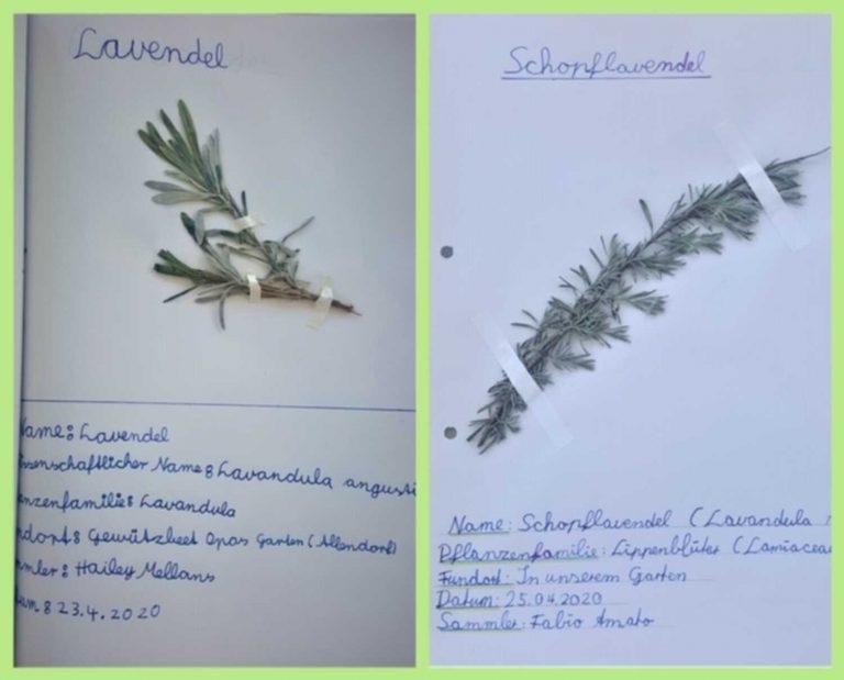 herbarium-10
