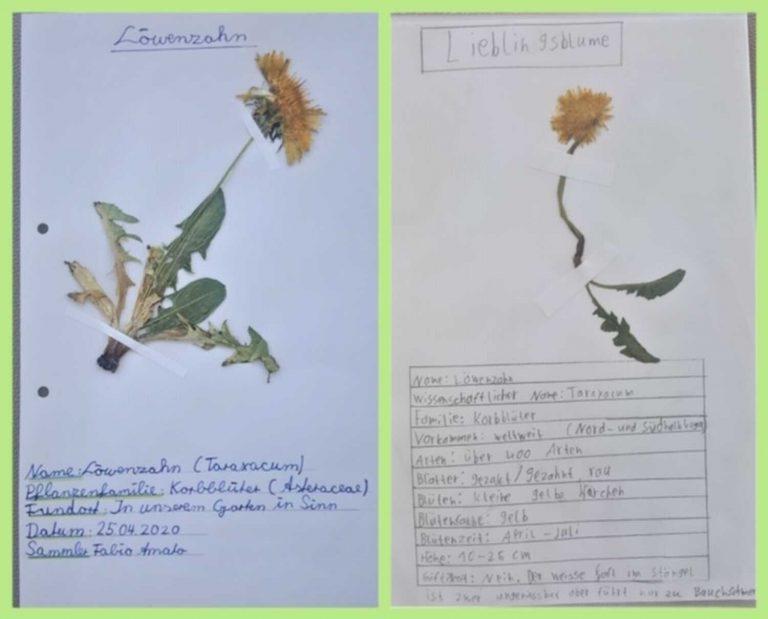herbarium-11
