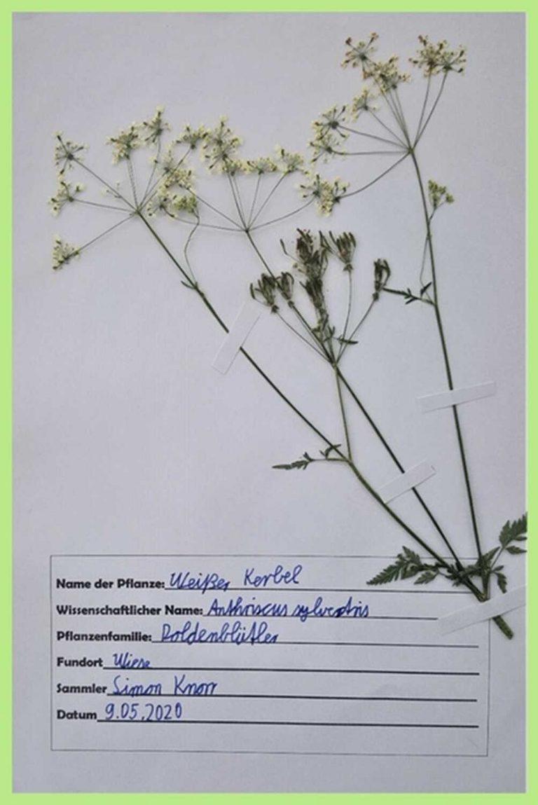 herbarium-12