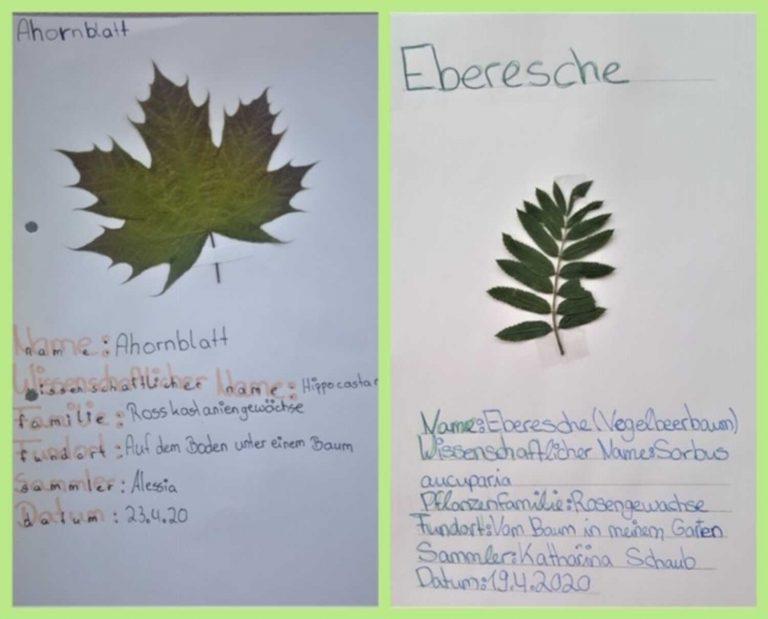 herbarium-2