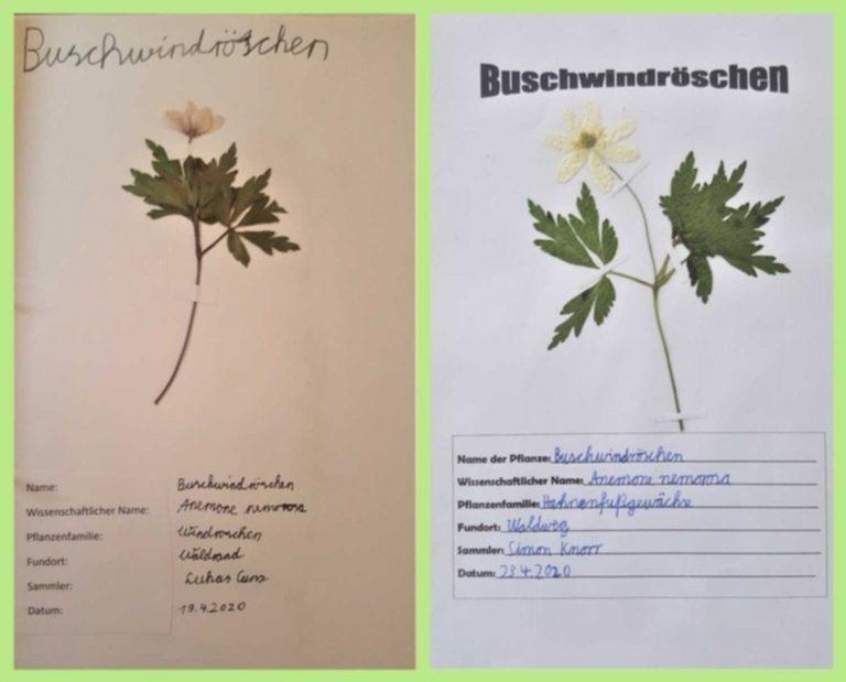 herbarium-3