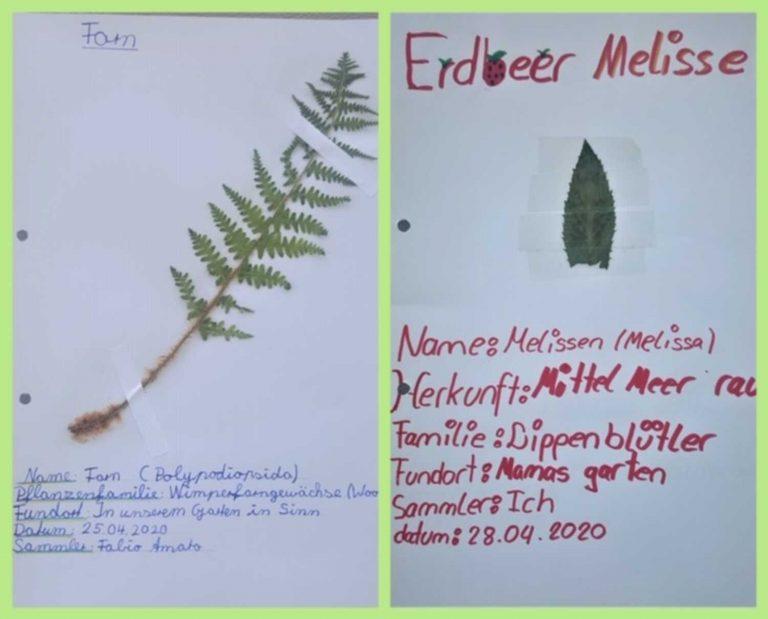 herbarium-8