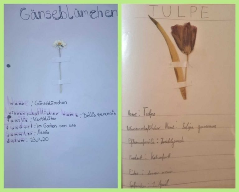 herbarium-9
